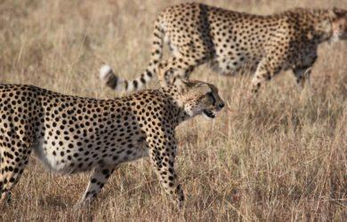Safari Hunting Trips