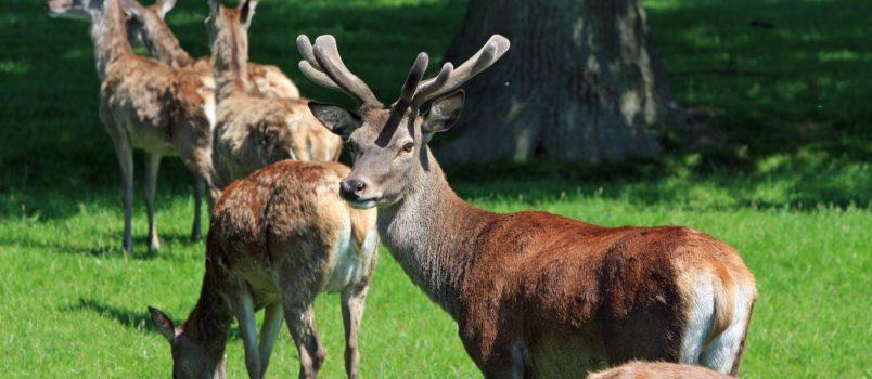 Deer Hunting Rifle Scope
